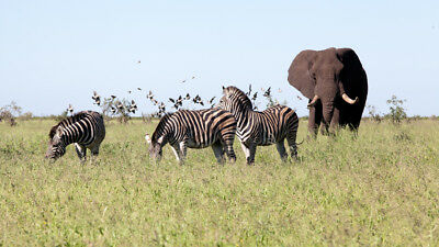 16-Day Kenya Tanzania Safari with Victoria Falls Tour Package -Mar/Nov/Dec Dates