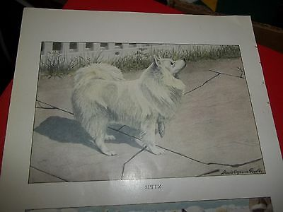 Louis A Fuertes Finnish Spitz bookplate from 1919 National Geographic Magazine