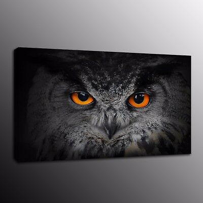 Animals Canvas Prints Painting Picture Owl Bird Wall Art Home Decor