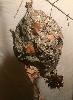 Natural wasp nest (19''h×12''W) excellent condition, man cave decor, texidermy!