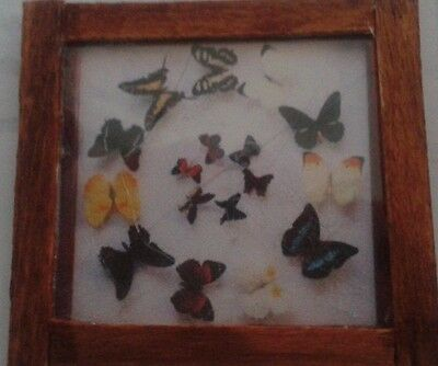 Dolls House Butterfly collection picture ( circular )