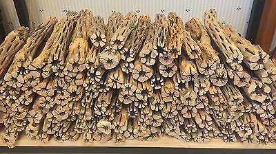 5 Pieces Of Aquarium Cholla Wood For Fish Pleco Shrimp Tanks Hermit Crabs