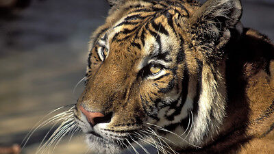 13-Day Tiger Trails Safari Tour Package in India (Oct-Nov-Dec Dates)