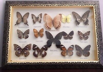 14 Real Framed Labeled Butterfly Collection Display Wall Art Taxidermy Gift
