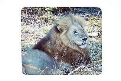 Mousepad, African Lion Design