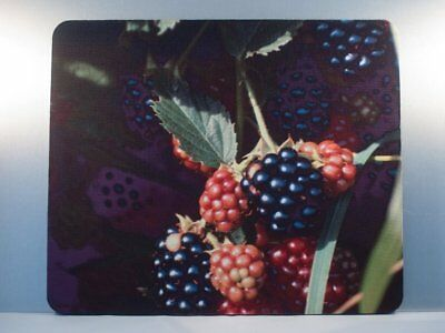 Mousepad, Blackberry Design