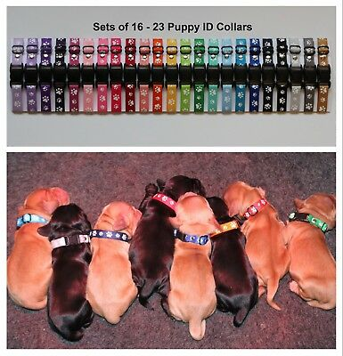 Sets of Puppy ID Whelping Collars Paw Prints Choose Your Own Colours for Kit Box