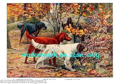 1919~Irish, English & Gordon Setter Dogs in Woods~NEW Large Note Cards