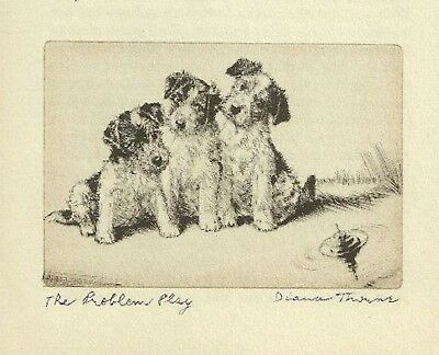Wire Fox Terrier  Vintage Dog Print 1936 Diana Thorne 3 Cute Puppies