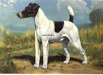 THE SMOOTH FOX TERRIER DOG ART 1942 PRINT VINTAGE Megargee Edwin GORGEOUS!