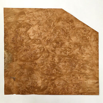 "Maple Burl Veneer - 13.5"" x 14.5"" x 1/42 - AA+ - No Backing"