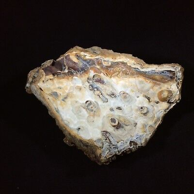 Agatized Fossil Coral with Druzy 171295 Metaphysical Emotional Balance Healing