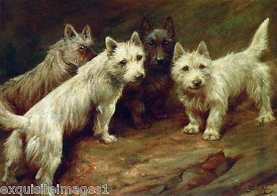 c1900 Moody~Cairn~Scottish~West Highland Terrier Dog Dogs~ NEW Large Note Cards