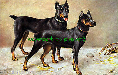 Antique Artwork~Handsome Pair of Doberman Pinscher Dogs~ NEW Large Note Cards