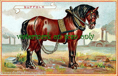 Antique Trade Card Art~Handsome Bay Suffolk Horse in Harness~ NEW Lge Note Cards