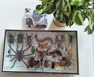 Real Rare Mix Set Taxidermy Insect Display Butterfly Gift Box Framed Bug Gpasy E