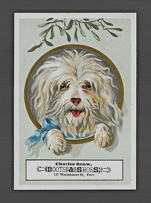Adorable Little Furry White Dog-1880s Victorian Trade Card-Shoes