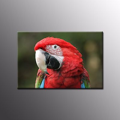 FRAMED Large Canvas Art Prints Parrot Poster Oil Painting Wall Art for Kitchen