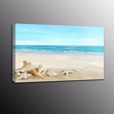 Shell on Beach Photo Canvas Prints Landscape Wall Art Painting Picture Poster