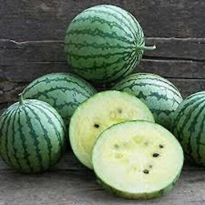 Watermelon Cream Of Saskatchewan  The Best For Short Season Areas 15+ Seeds