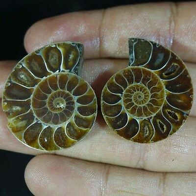 102.75CTS Beauty Small Pair of Ammonite Fossil Specimen Shell Healing Madagascar