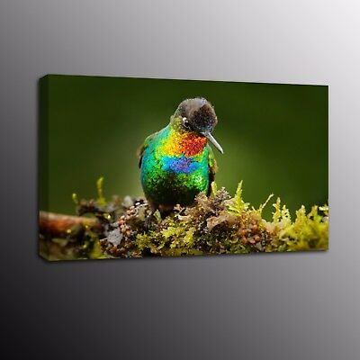 Animals Bird Wall Art Decor Parrots Canvas Print Art Painting Picture Home Decor