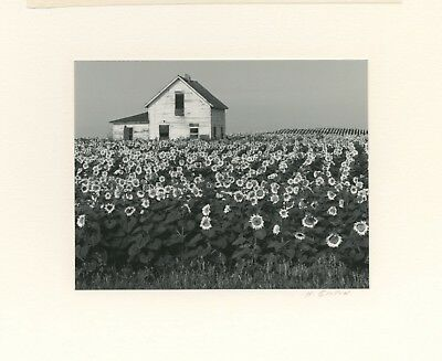 Henry Gilpin - Signed Photograph, Sunflowers, 1981