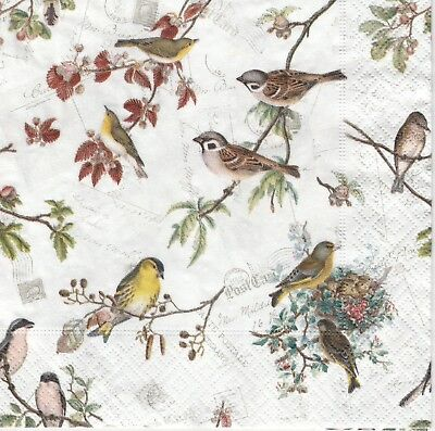 4x Paper Napkins for Decoupage Decopatch Craft Bird Family