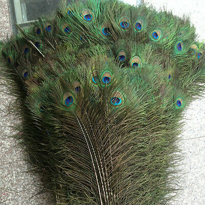 PEACOCK TAIL FEATHERS Real Natural Feathers 10-12 Inches In Height Top Quality