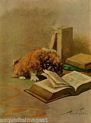 1914 Maud Earl~ Pekingese Puppy Dog Nibbling on Book ~ NEW Large Note Cards