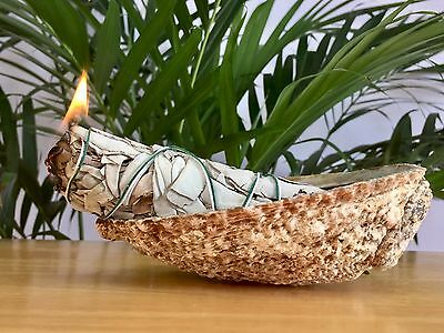 "5.5"" Premium California White Sage Smudge Stick Incense W/Abalone Shell Holder."