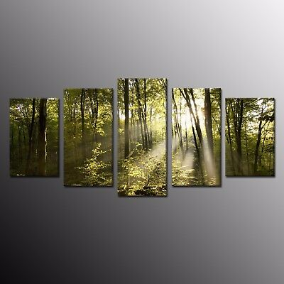 Sunset in the woods Giclee Canvas Print Oil Painting Wall Art Home Decor 5pcs