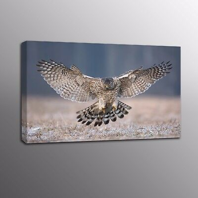 Animals Modern HD Canvas Print Home Decor Eagle Bird wall Art Painting Picture