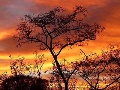 Stunning Sunset Trees Canvas Picture Poster Print Wall Art Unframed #1302