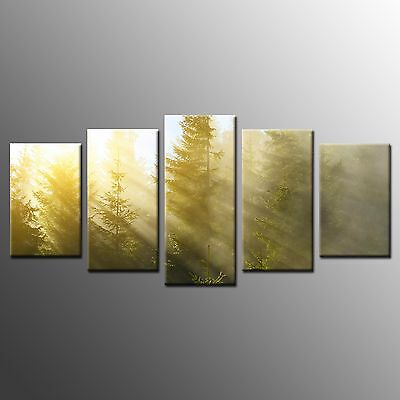 FRAMED Large Wall Art Decor Golden Light in Forest Canvas Picture Prints 5 Panel