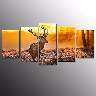 FRAMED Large Animal Wall Art Canvas Painting Single Red Deer Canvas Print-5pcs