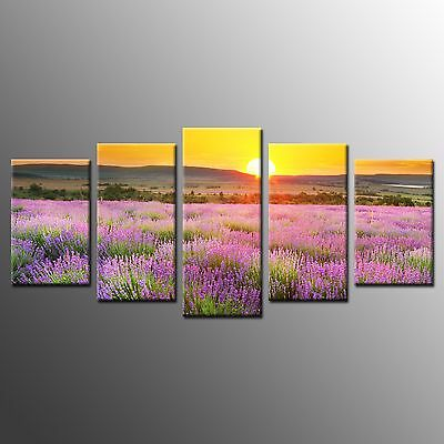FRAMED Wall Art Decoration Pink Flower Field Stretched Canvas Prints Poster-5pcs