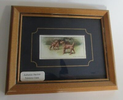Framed Matted Irish Terrier Player's Cigarette Trade Card