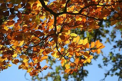 Autumn Tree Leaves Canvas Picture Poster Print Wall Art Unframed #1792