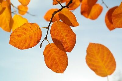 Autumn Tree Leaves Canvas Picture Poster Print Wall Art Unframed #1846
