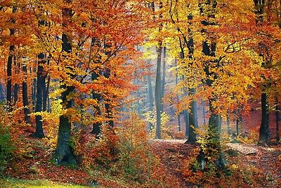 Autumn Woodland Trees Canvas Picture Poster Print Wall Art Unframed #2016