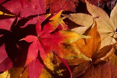 Autumn Tree Leaves Canvas Picture Poster Print Wall Art Unframed #2264