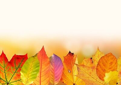 Stunning Autumn Tree Leaves Canvas Picture Poster Print Wall Art Unframed #2270