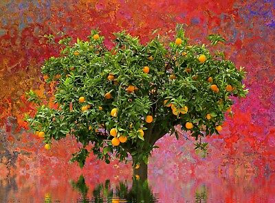 Colourful Abstract fruit Tree CANVAS PICTURE POSTER PRINT WALL ART UNFRAMED #A32