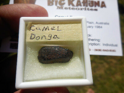 Nice crusted 2.91 gram Camel Donga Meteorite - Eucrite - found in Australia 1984