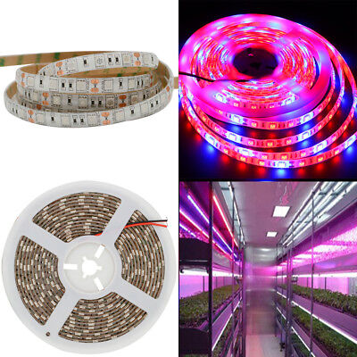 5M 5050SMD  LED Strip Grow Light Lamp  3 Red 1 Blue For Hydroponic Greenhouse