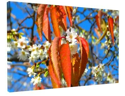 Flower Tree Blossom Canvas Picture Print Wall Art Chunky Frame Large 1770-2
