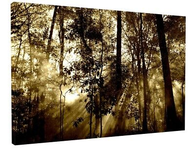 Black + White Forest Canvas Picture Print Wall Art Chunky Frame Large 1809-2