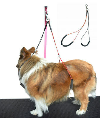 Dog Grooming Loop No Sit Haunch Holder Grooming Restraint by Gravitis Pet Line