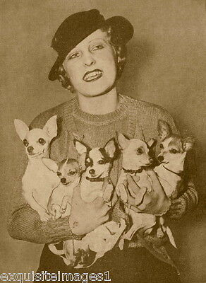 1930s Photo~Pretty Woman w Hat Holding 5 Chihuahua Puppy Dog~Dogs~ NEW Cards